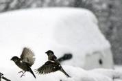 국악인이 추천하는 휴일의 시 18: 새롭지 않은 새해의 시(이동순)