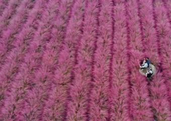 핑크, 핑크... 가을이 주는 선물